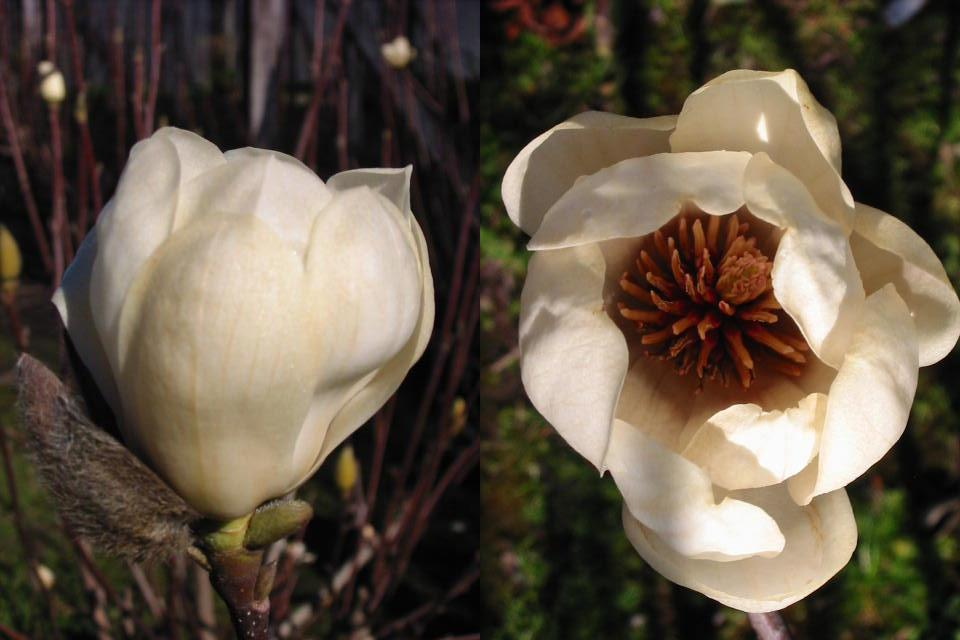 Plano del vivero for Vivero las magnolias